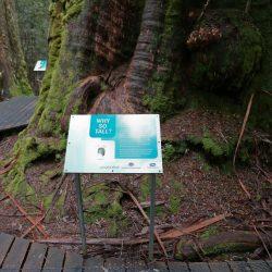 Styx Big Tree Reserve - Graham Freeman & Tourism Australia