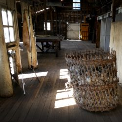 Wool in barn at Rathmore